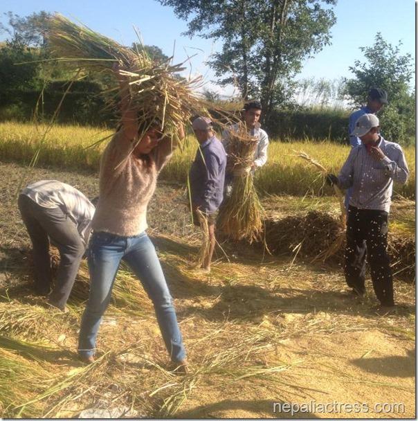 binita Baral - paddy field (1)