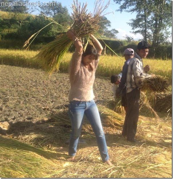 binita Baral - paddy field (2)