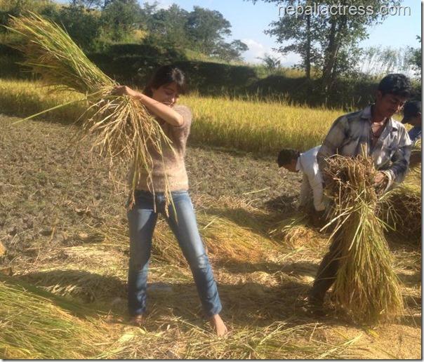 binita Baral - paddy field (3)