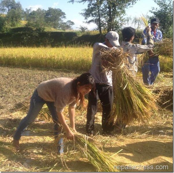 binita Baral - paddy field (4)