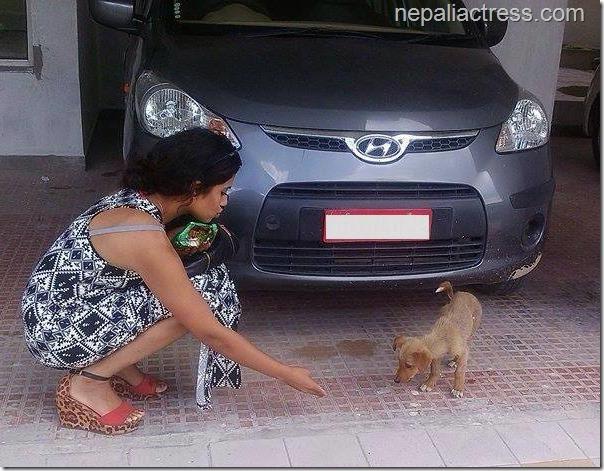 surabhi jain stray dog