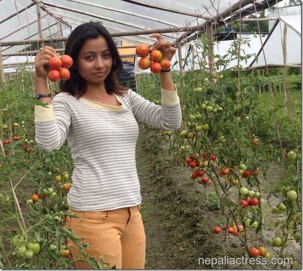 binita baral with tomato in her farm